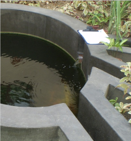 Feng Shui Wasserdrachen